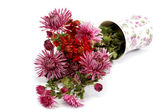 Chrysanthemum flowers in a vase on a white background. — Stock Photo