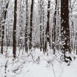 Stock Photo: Landscape winter forest.