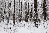 Landscape winter forest. — Stock Photo