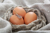 Eggs on the canvas. — 图库照片
