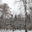 Stock Photo: Winter forest. Trees under snow.