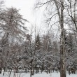 Winter forest. Trees under the snow. — Stock Photo