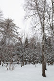 Winter forest. Trees under the snow. — Foto de Stock
