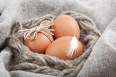 Brown eggs on the canvas. — Stockfoto
