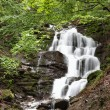 Waterfall in green forest. — Stock Photo #26113945