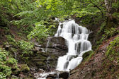 Waterfall in a green forest. — Stock Photo