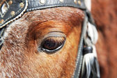 Eye of a horse close up. — Stock Photo