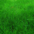 Stock Photo: Fresh green grass as a background.