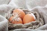 Uova marrone sulla tela. — Foto Stock