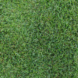 Fresh green grass texture background. — Stock Photo