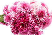 Bouquet of red flowers, chrysanthemums. — Stockfoto