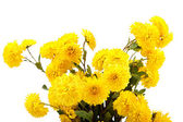 Bouquet of yellow flowers, chrysanthemums. — Stockfoto
