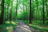Ścieżka w lesie wiosna zielony. — Zdjęcie stockowe