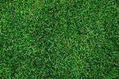 Textura linda grama verde. — Foto Stock