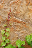 Stone texture with green plant as background. — Photo