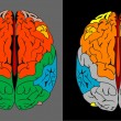 Stock Photo: Color of brain