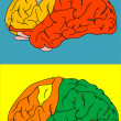 Stock Photo: Brain color