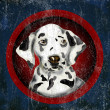 Royalty-Free Stock Photo: Dalmatian