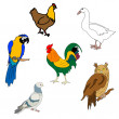 Royalty-Free Stock Vector Image: Set of birds