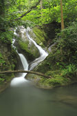 Water fall in green forest — Stock Photo