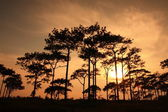 Silhouettes forest in sunset background — Stock Photo