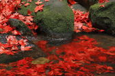 Red maple on stone in water — Stock Photo