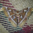 Moth on mat — Photo