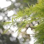 Bamboo leaf on light background — Stock Photo