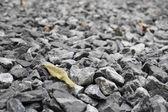 Dry leaf on pebble stones — Stockfoto