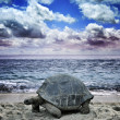 Stock Photo: Big Turtle On The Ocean Beach