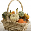 Stock Photo: Mini Pumpkins