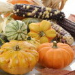 Mini Pumpkins And Indian Corn — Stock Photo