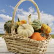 Mini Pumpkins — Stock Photo