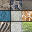 Animal  Skin, Fur And Feathers Collage - Stock Photo