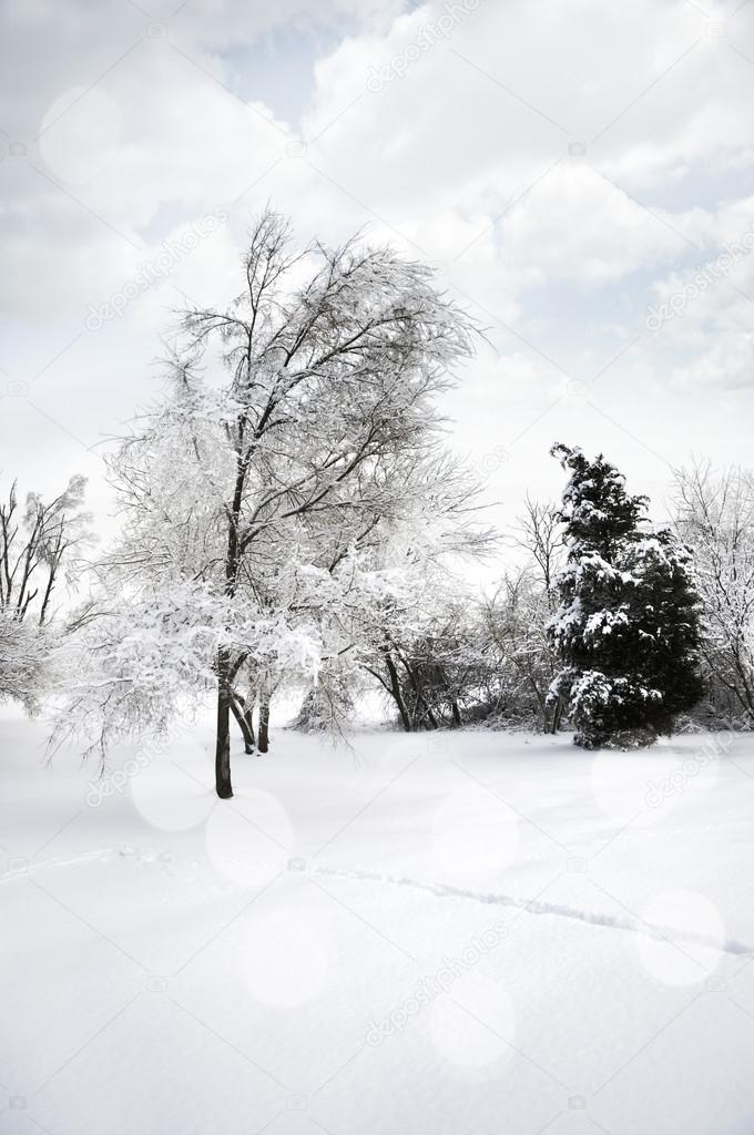 Winter Landscape With Snow And Trees — Stock Photo #16162861