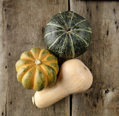 Squash Collection — Stock Photo