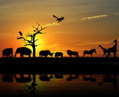 African Animals — Stock Photo