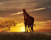Two Giraffes At The Sunset — Stock Photo