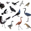 Stock Photo: Wild Birds