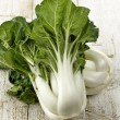White Choy Sum — Stock Photo