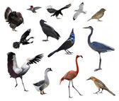 Wild Birds — Stock Photo