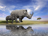 Mother Rhino With Calf — Stock Photo
