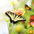 Butterflies On The Flowers — Stock Photo