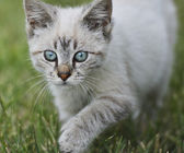 Young Cat Walking On Grass — Stock Photo