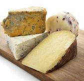 Gourmet Cheese Assortment — Stock Photo