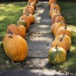 Large Pumpkins Along A Sidewalk — Stock Photo