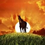 Giraffes At Sunset — Stock Photo #32017909