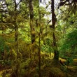 Stock Photo: Rain Forest