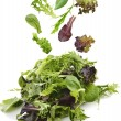 Salad Leaves — Stock Photo #32594439