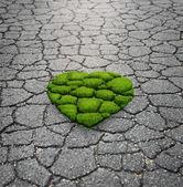 Trawa rośnie od asfaltu — Zdjęcie stockowe